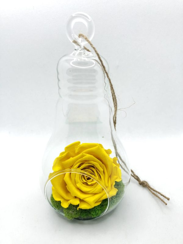 Fbym Yellow Hanging Lightbulbs front